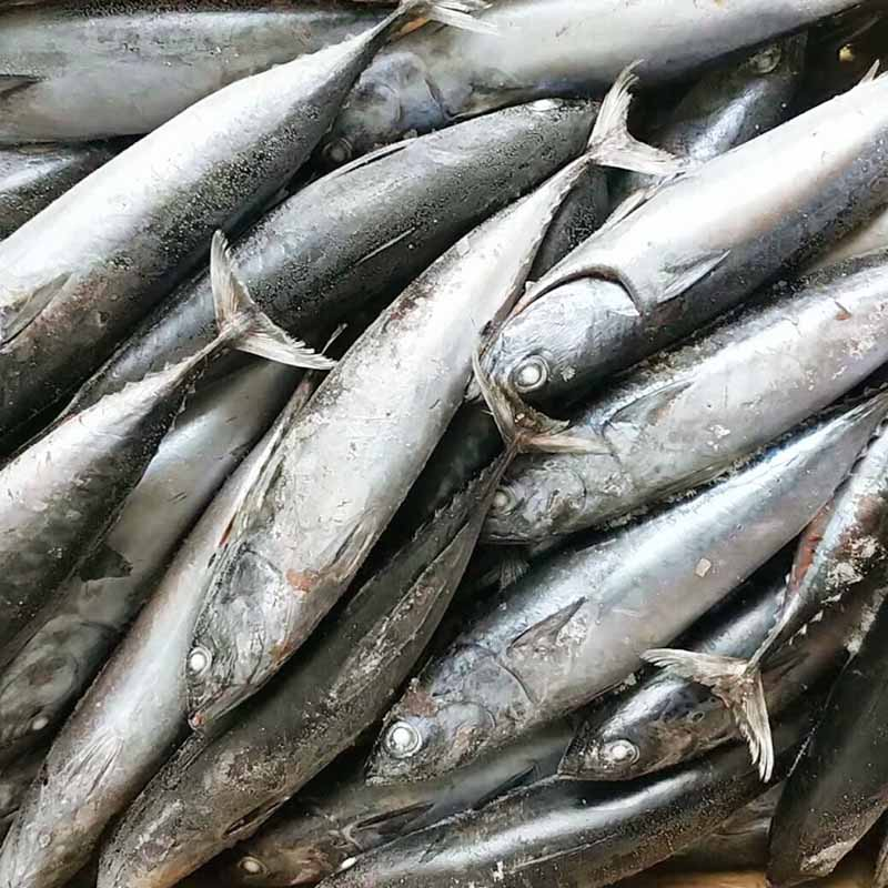 LongSheng High-quality bonito fish price for market-1
