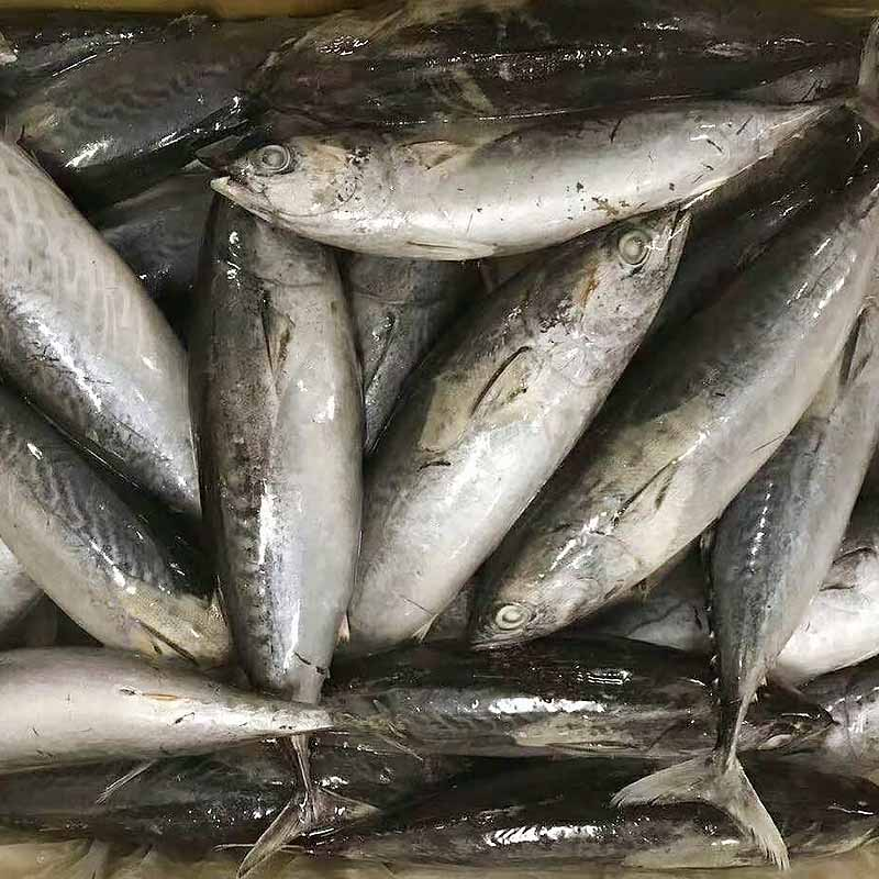 LongSheng Wholesale frozen seafood bonito fish Suppliers for seafood shop-2