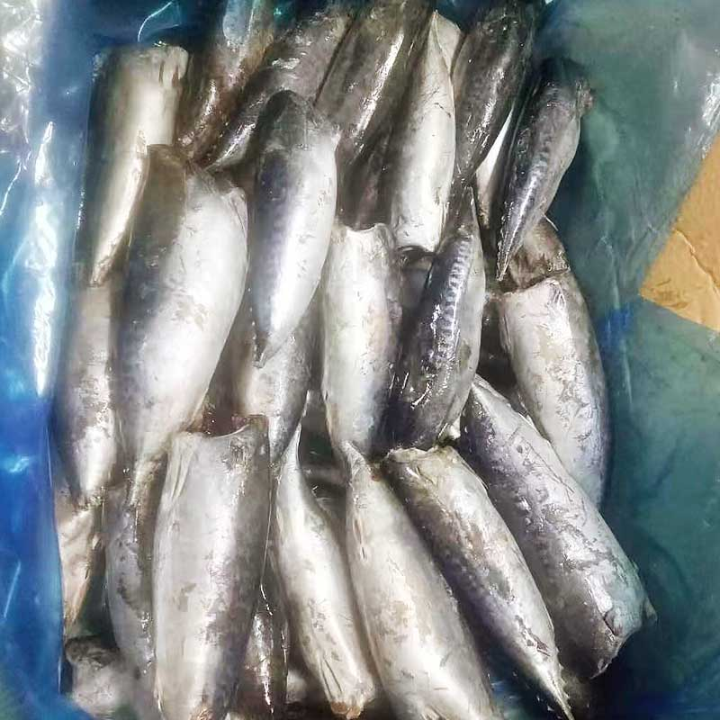 LongSheng fish quality frozen fish manufacturers for seafood shop-1
