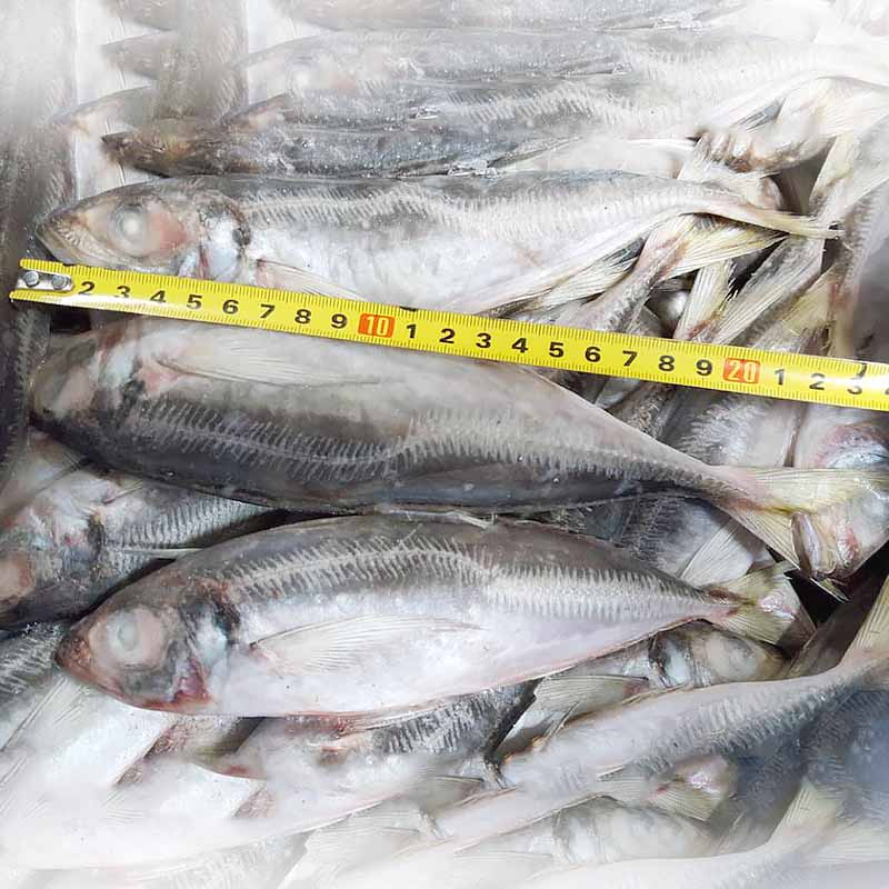 bulk buy wholesale frozen fish prices mackerel manufacturers for cafe-2