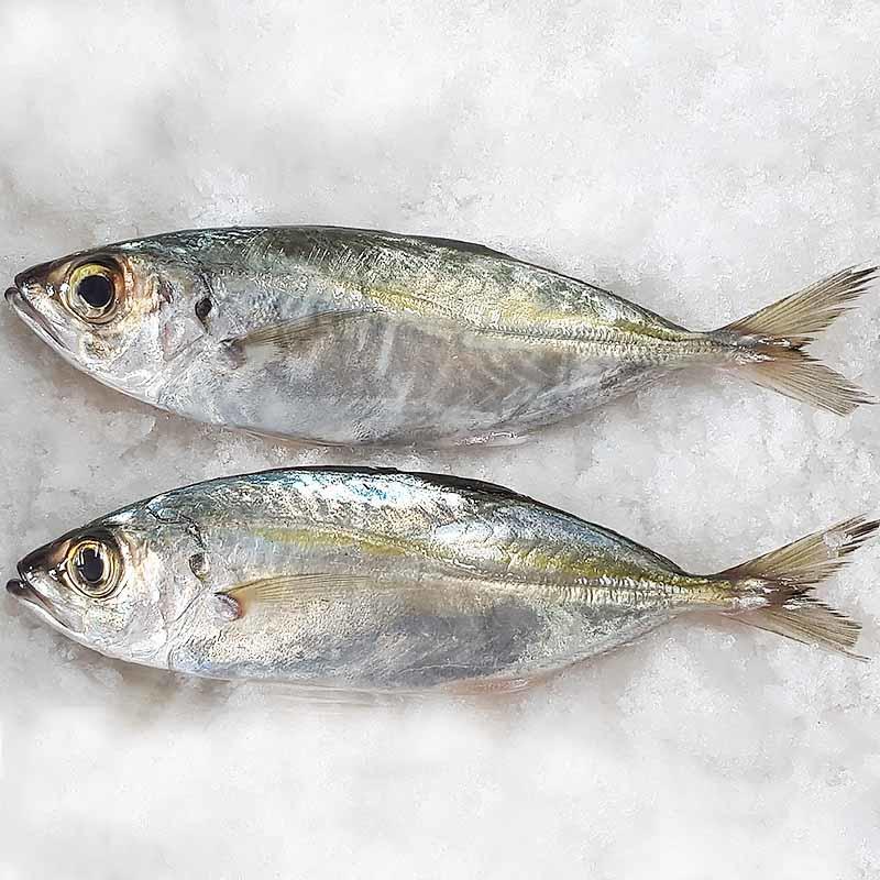 Скумбрия конская замороженная рыба целый раунд (Trachurus Japonicus)