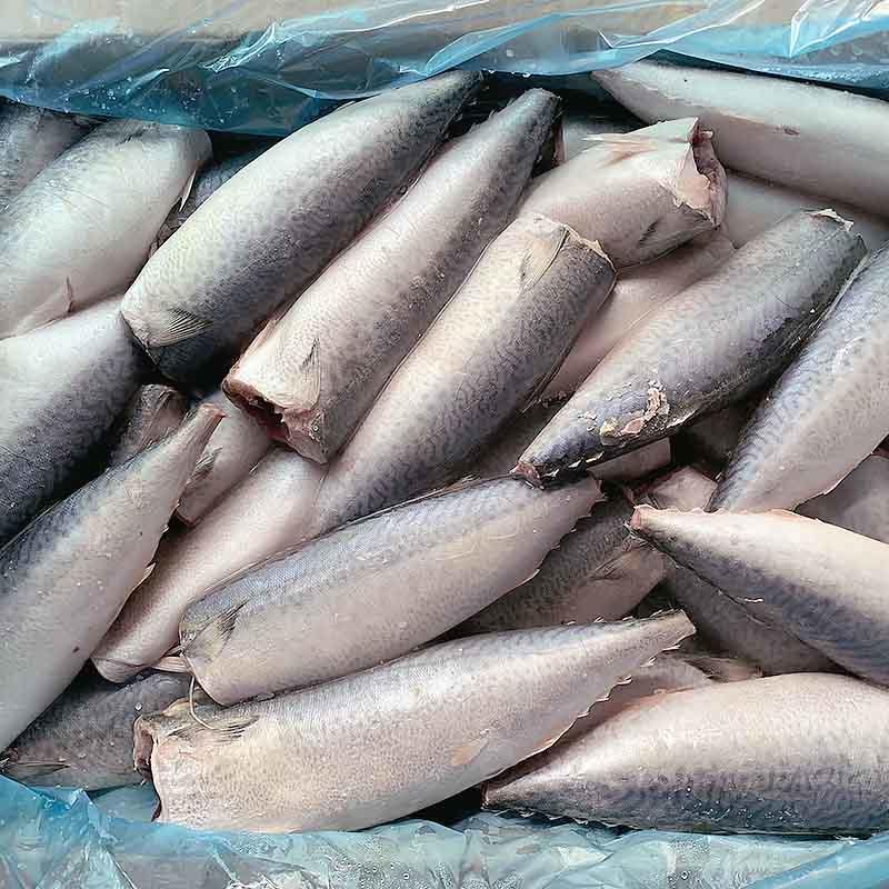 frozen Mackerel HGT