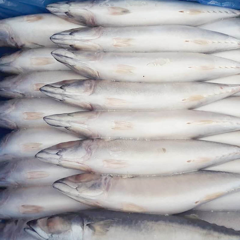 frozen Mackerel whole round-Frozen Fish Exporters-Wholesale Frozen Fish Suppliers-Frozen Seafood Sup