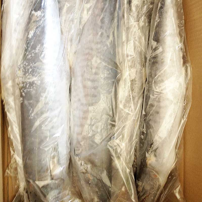 Wholesale frozen spanish mackerel for sale mackerel for market-2