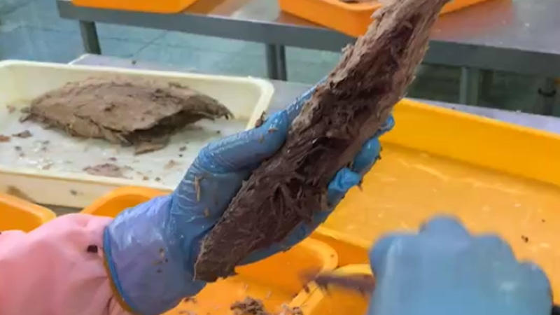 Video of frozen seafood