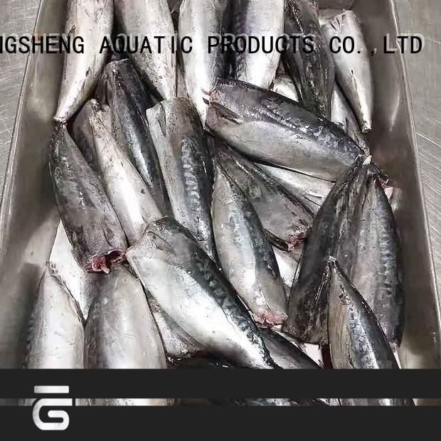 LongSheng hgt frozen bonito whole round Suppliers for supermarket