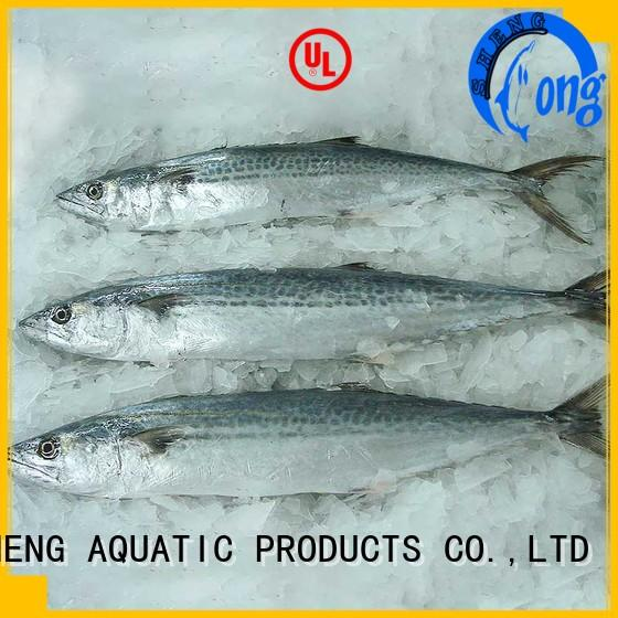 Top frozen spanish mackerel whole round whole Suppliers for seafood shop