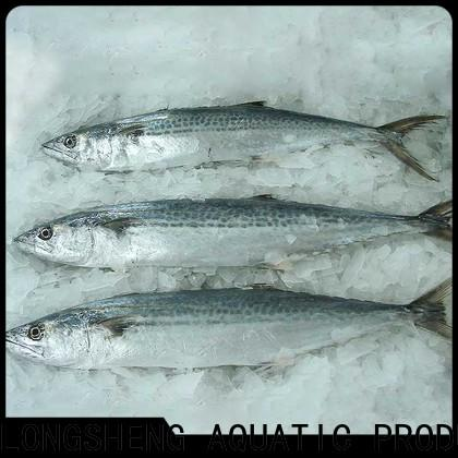 LongSheng bulk buy spanish mackerel fish price factory for supermarket