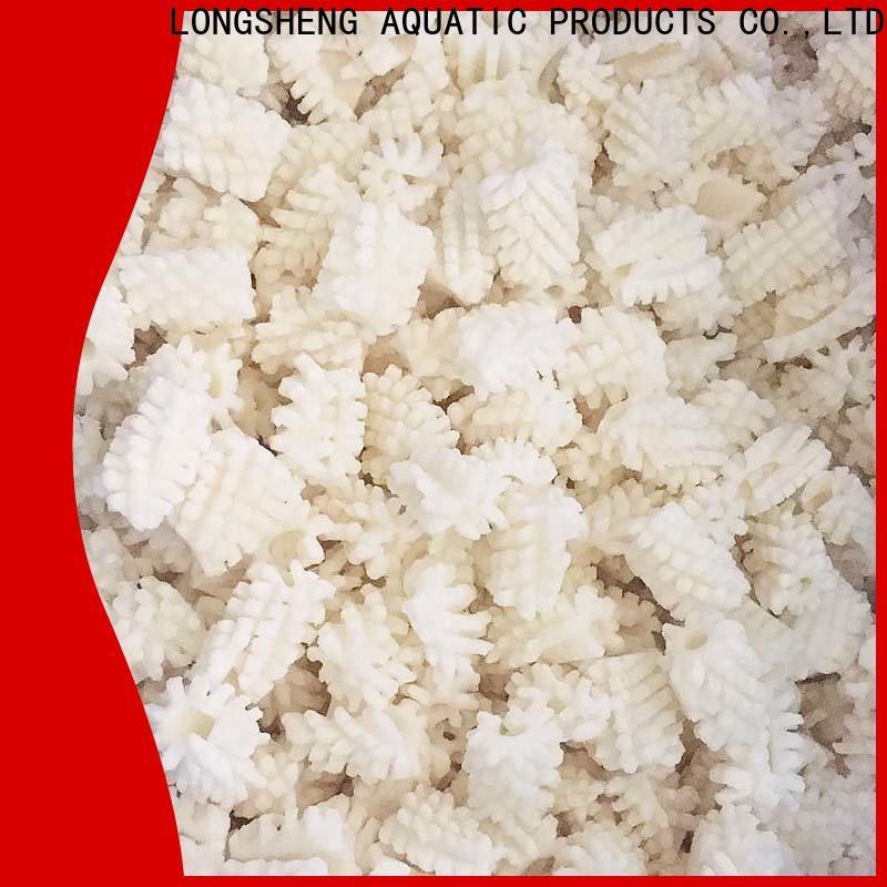 bulk buy squid supplier argintinus Suppliers for cafe
