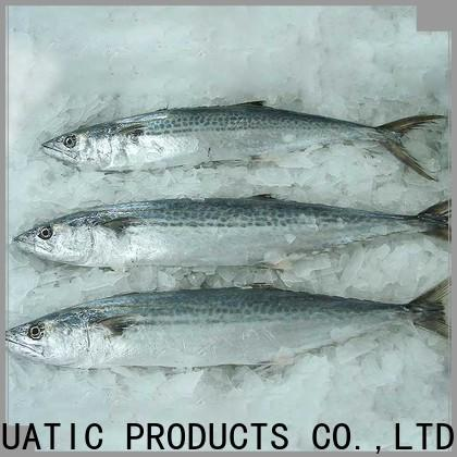 LongSheng whole frozen spanish mackerel fillets company for seafood market
