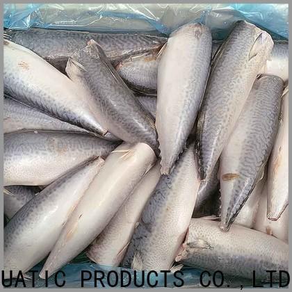 LongSheng bulk purchase frozen mackerel for sale