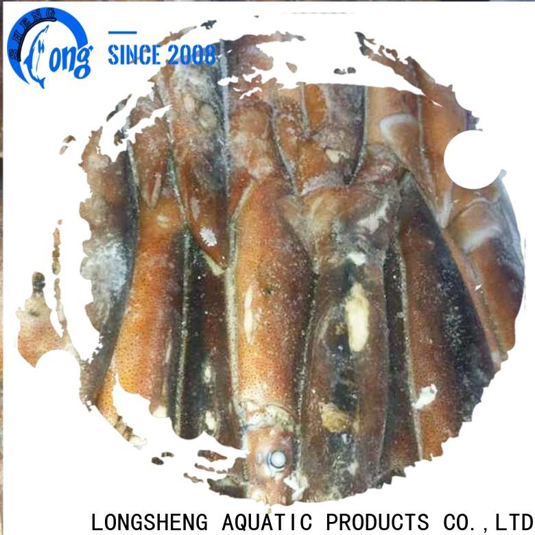 bulk purchase frozen cuttle fish whole round round company for cafe