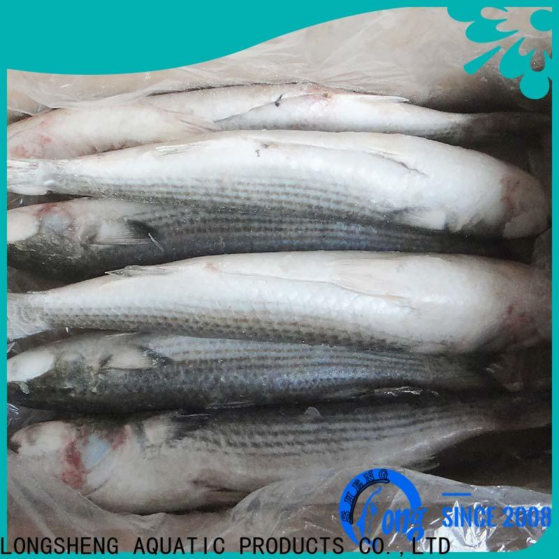High-quality frozen grey mullet grey Supply for market